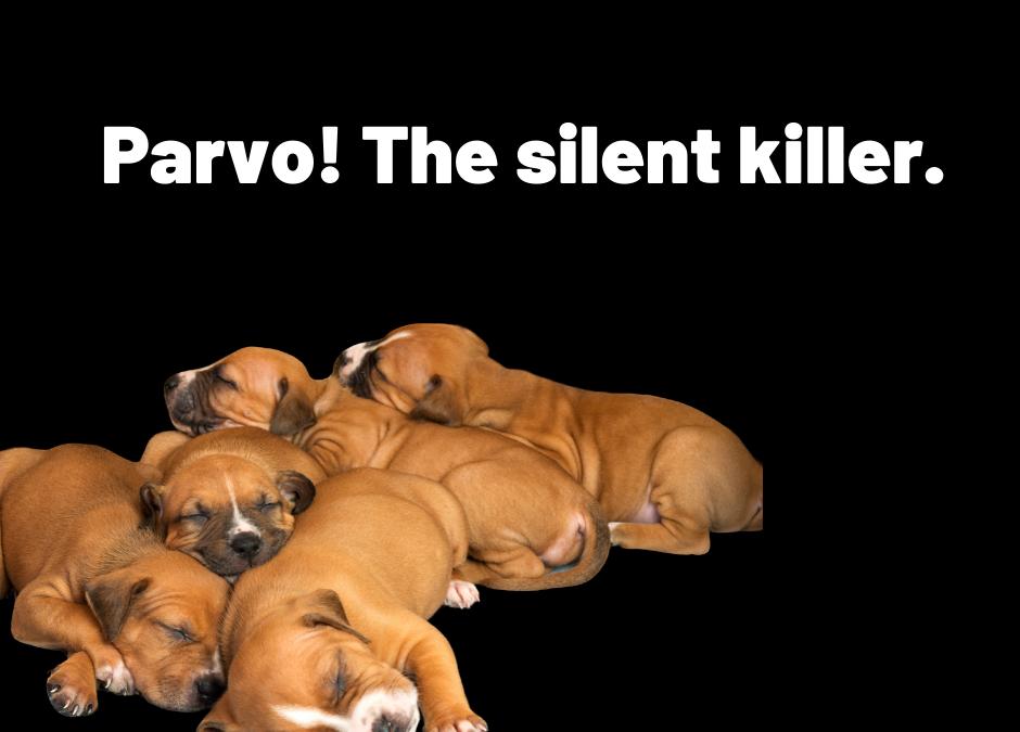 Parvo, the silent killer