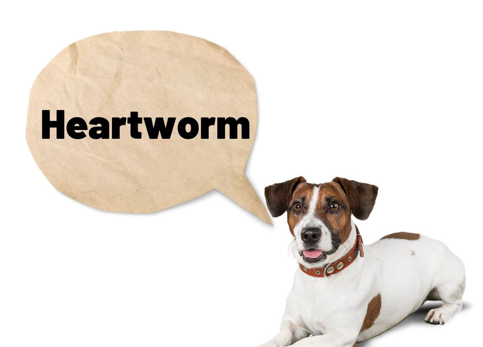 Heartworm, sspca, spca seychelles, seychelles spca, seychelles animal diseases