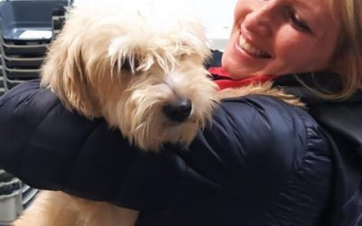 Adoption Story: Toto goes to her forever home