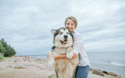 The benefits of pet exercise