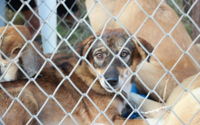 Prevent animal cruelty with these 10 tips