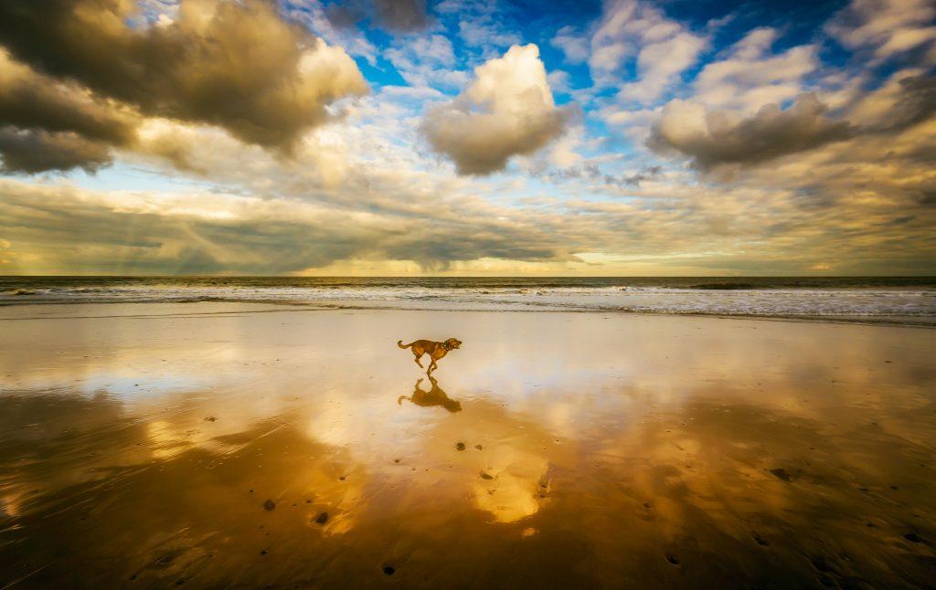 seychelles animals, seychelles dogs, dog on beach, seychelles beach dog, seychelles animal rescue, seychelles animal shelter, seychelles animal welfare, pet exercise