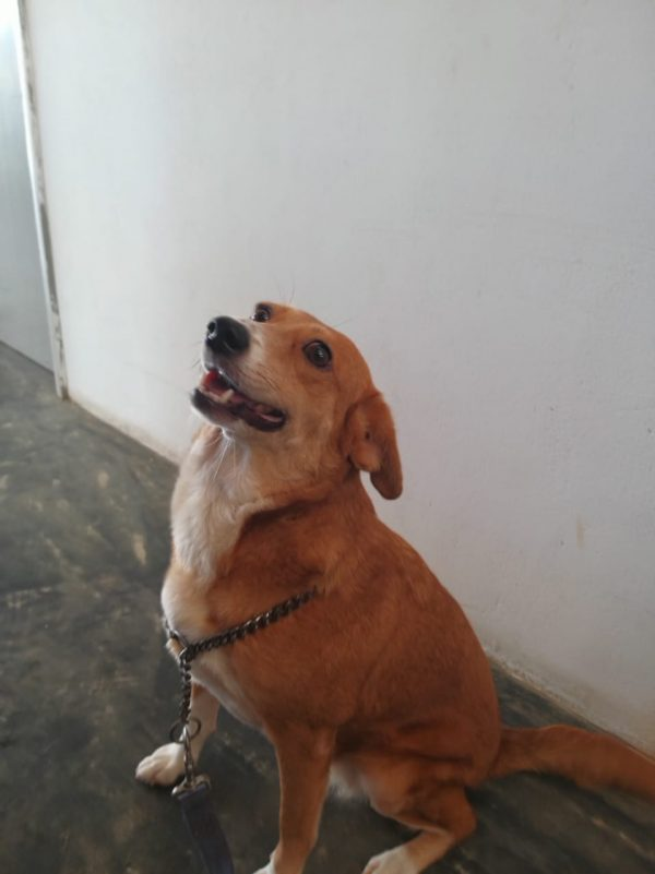 animal adoption, adopt don't shop, sspca, seychelles spca, seychelles animals, fostering animals, seychelles, seychelles animal rescue, seychelles animal shelter